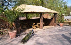 Safari Lodge 11