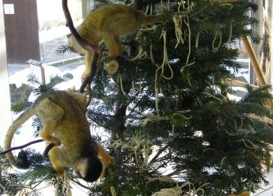 Zoo Vivarium Bio Weihnachtsbaeume 1 1